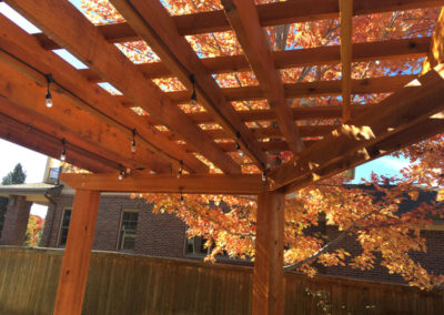 Pergola, Autumn Blaze Maple